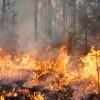 Incendiando la sostenibilidad